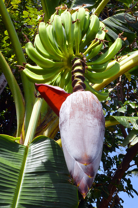 Botanische tuin Kebun Raya Eka Karya