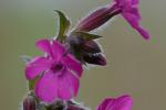 Macro bloem bossen