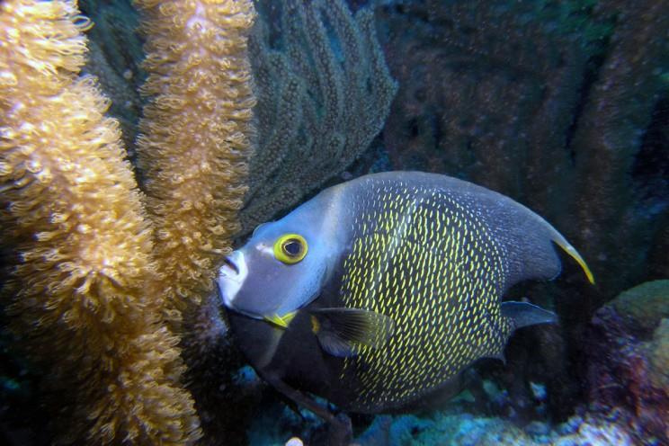 De Keizervis Bonaire