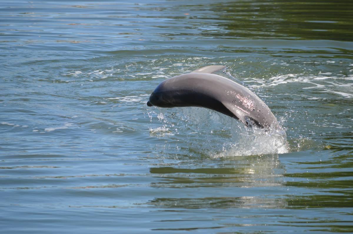 Dolfijn Cuba