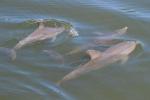Dolfijnen Cuba