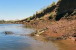 Grote krokodil in de tarcoles rivier
