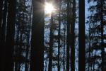Zonsondergang in het Beijerse Woud