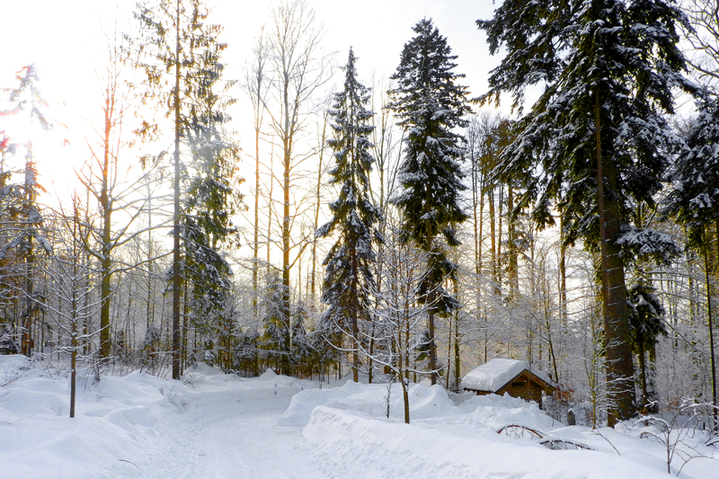 Prachtig besneeuwde Beierse Woud