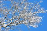 Betoverend mooi, sneeuw op de takken en stralende blauwe lucht