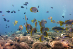 Wat een kleurenparadijs hier onderwater