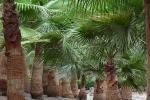 Tuinen vol met palmbomen