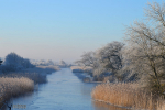 Winter in de Amsterdamse waterleidingduinen