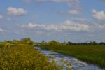 Koolzaad in de polder Kockengen