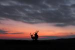Edelherten op Nationaal park de Hoge Veluwe