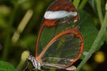 Pracht vlinder in vlindertuin