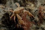Fluweel krabbetje