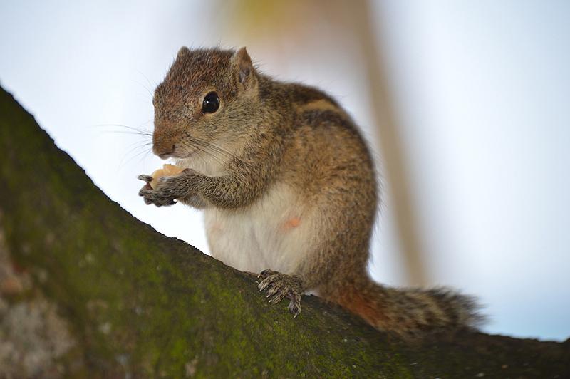 Lief eekhoorntje