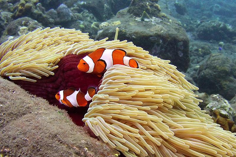 Nemo's