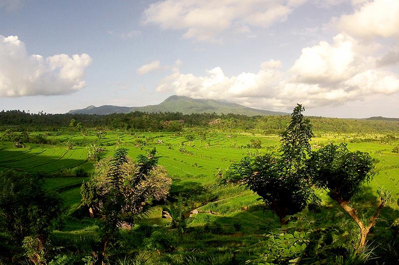 Uitzicht over de rijstvelden