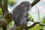 Prachtige aap in de boom