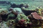 Karet schildpad op wrak