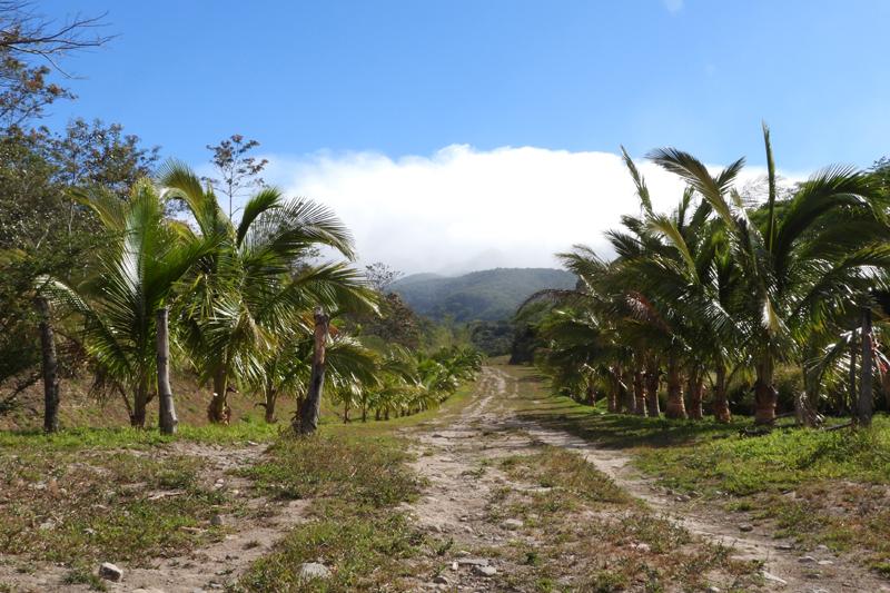 Prachtige palmplantages