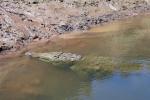 Krokodillen in de tarcoles rivier
