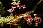Prachtige bloemen rond de vulkaan Arenal