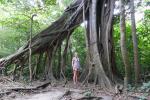 Mooi die grote bomen in het nevelwoud
