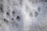 Voetsporen van de Lynx 2019