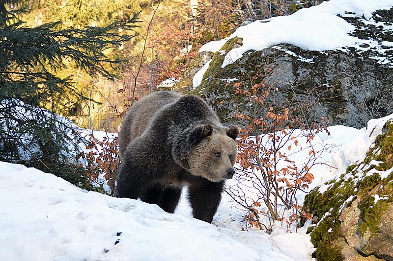 Bruine beer, we hebben er 5 gespot