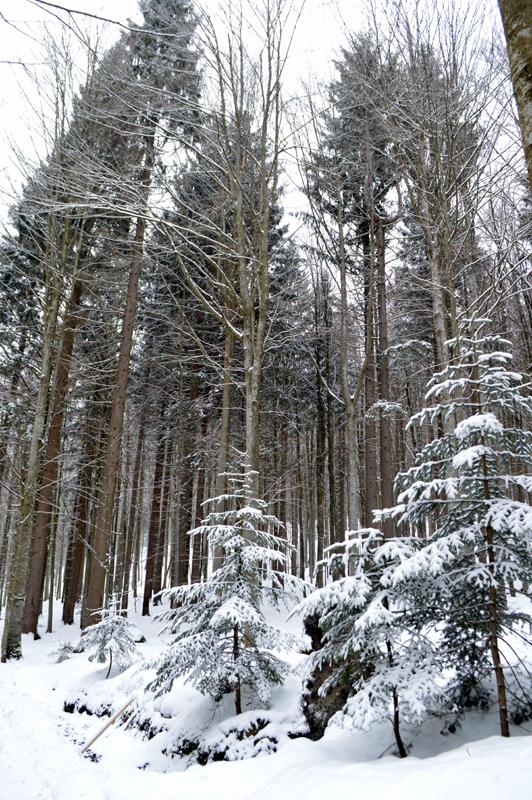 Beijerse Woud in de winter