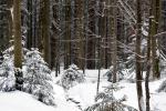 Beijerse Woud in winterkleed