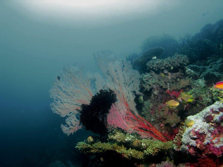 Wat een kleuren in deze koraalformatie