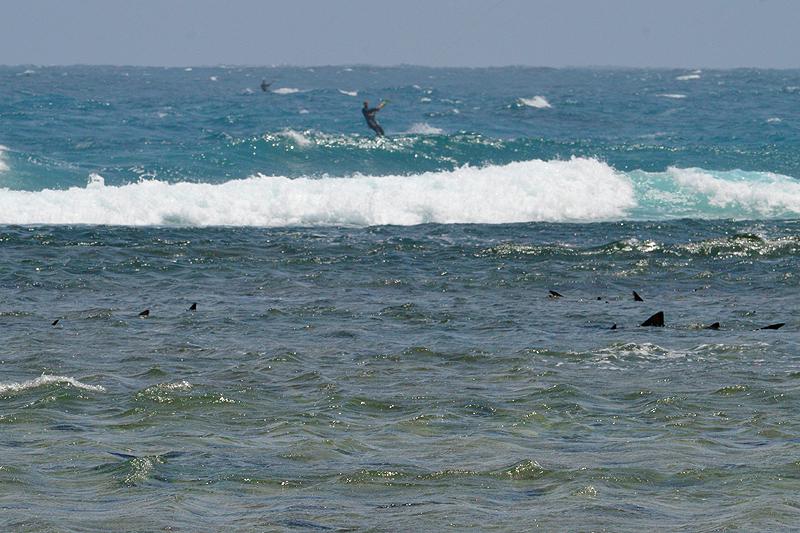 Sharkbay, vol met Citroenhaaien