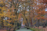 Herfst bos van Gunterstein