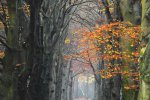 Herfst bos achter Hilversumse heide