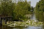 Waterlelieveld Scheendijk