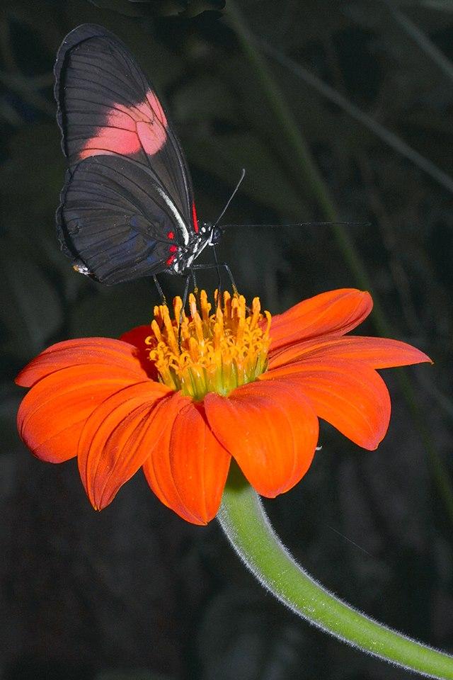 Vlinder op bloem in vlindertuin