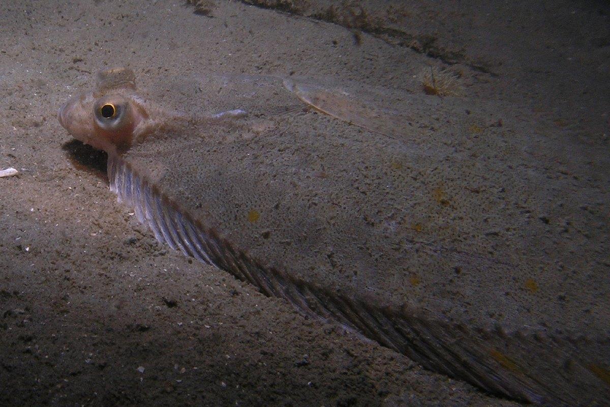 Bot op zandvlakte