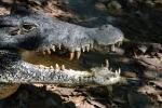 Bek van de cubaanse krokodil