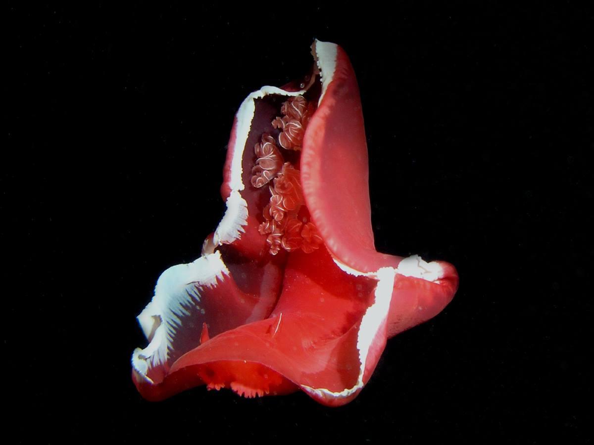 Spaanse Danseres danst in de nacht