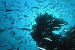 Zo veel vis rond koraalpilaar