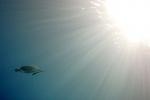 Schildpad in het zonnetje
