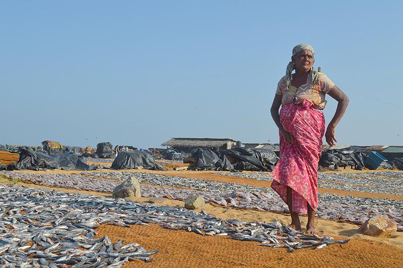 De vismarkt van Negombo