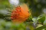 Kandy Royal Botanc Gardens