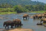 Pinnawela is een kleine plaats aan de Ma Oya rivier