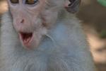 Jong ondeugend aapje