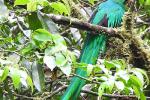 Quetzal-man