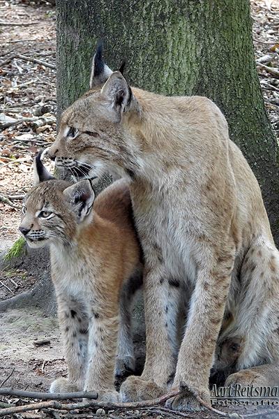 Moeder met  jong 10 augustus 2020