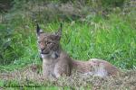 Vader Lynx rust uit  19 augustus 2021